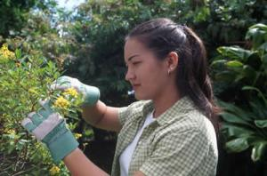 picture of woman trimming hedge in garden